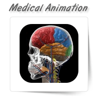 Medical Illustration & Animation